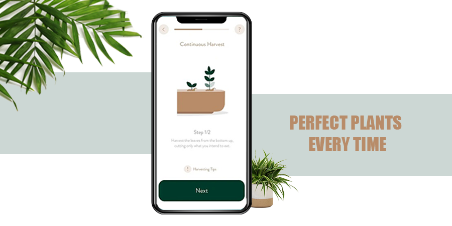 Perfect Plants Every Time